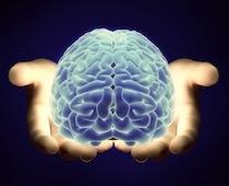 Holones hjärna